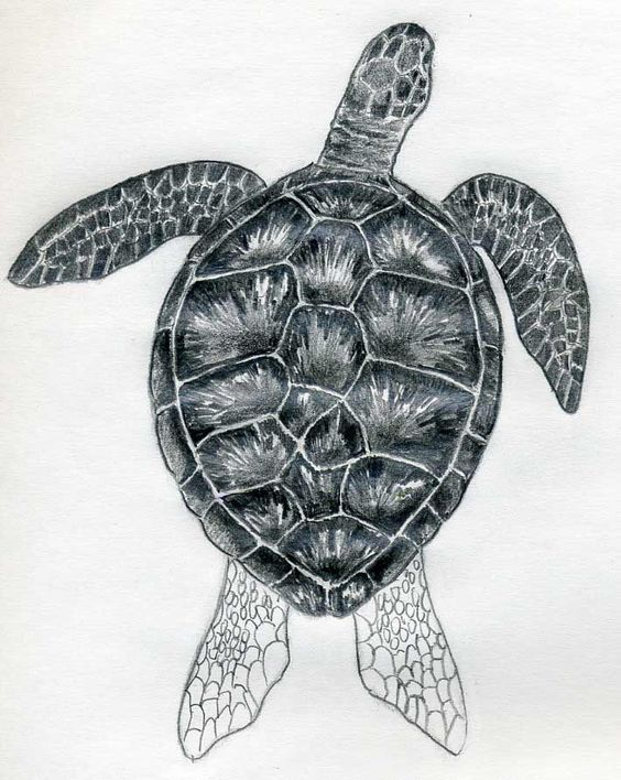 easy draw turtle - photo #34