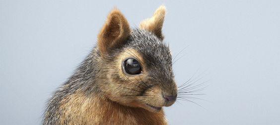 CG Squirrel | Lorett Foth