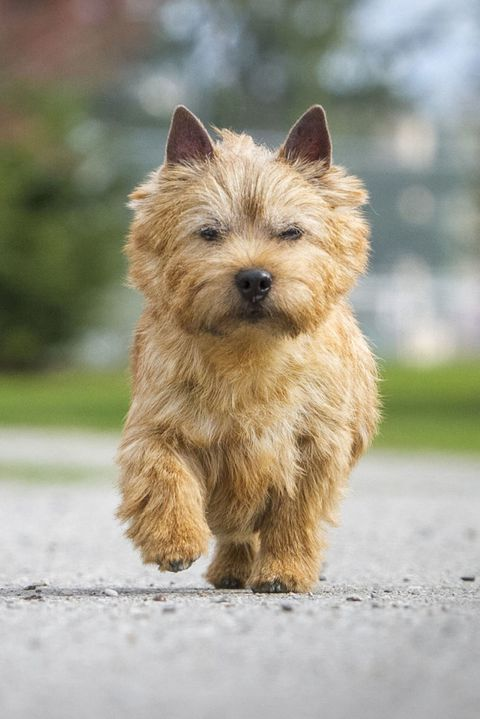 Just 43 Pictures Of Sweet And Fluffy Small Dog Breeds You Ll Want