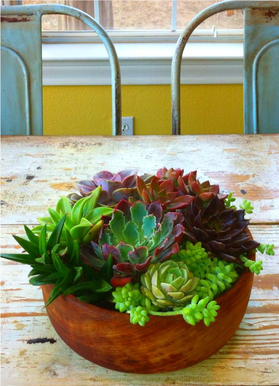 Wooden bowl centerpiece succulents gardening as we like