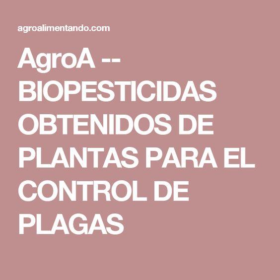 AgroA -- BIOPESTICIDAS OBTENIDOS DE PLANTAS PARA EL CONTROL DE PLAGAS