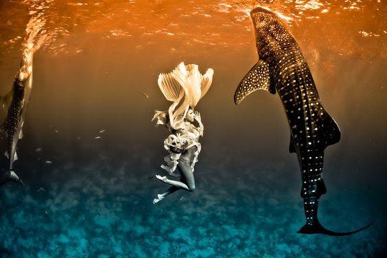 kristian schmidt underwater photography - shark whale - chicquero 13