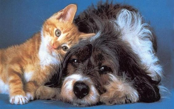 Cats and dogs can live together peacefully. Read my latest blog for some tips and advice to help with the transition.