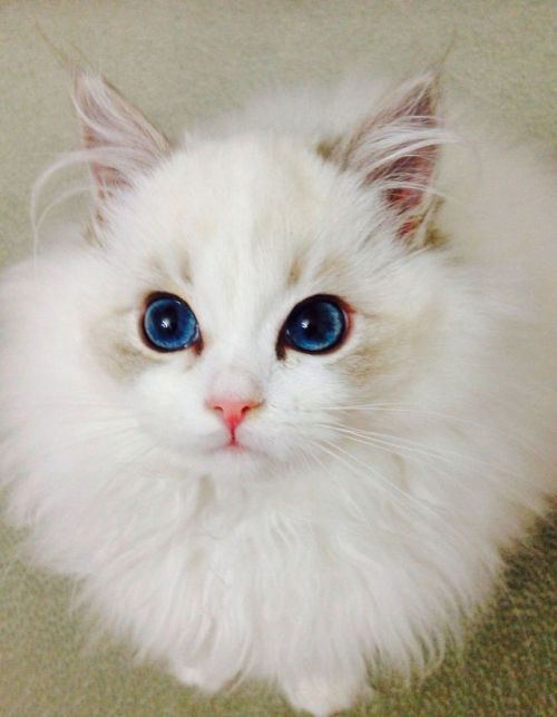 How To Bathe My Cat In 2020 Cute Cats Pretty Cats Beautiful Cats