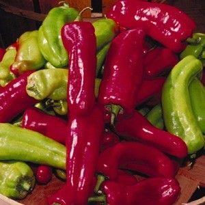 Cubanella Hybrid hot pepper