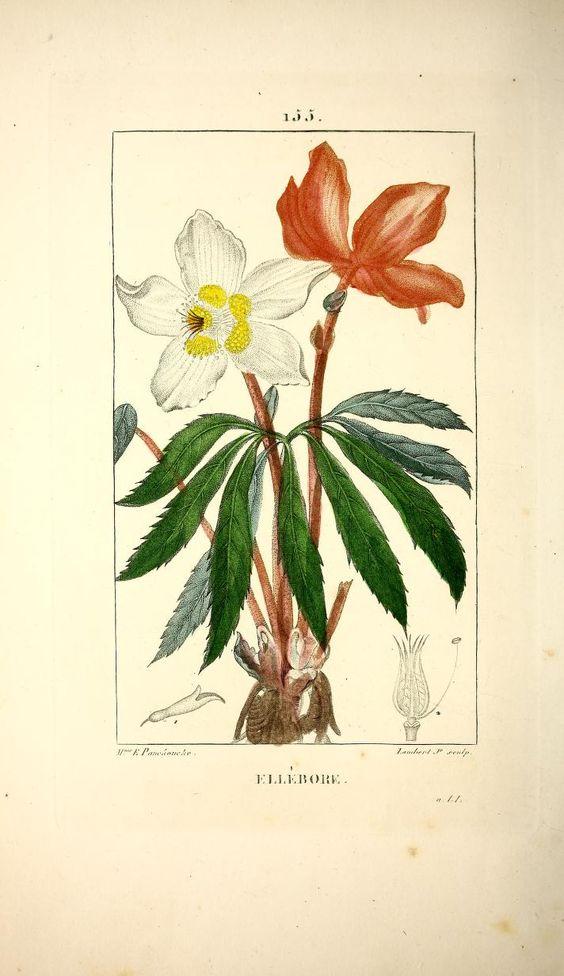 Flore médicale /décrite par MM. Chaumeton, Poiret, Chamberet ; peinte par Mme E. P. ... et par M. J. Turpin. 1828-32