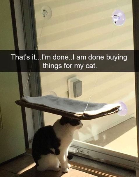 Turns Out That Documenting Cats On Snapchat Is Entertaining To Look At Watch More Cat Cats Snapcat Catlo Cat Memes Clean Cat Memes Funny Cat Fails