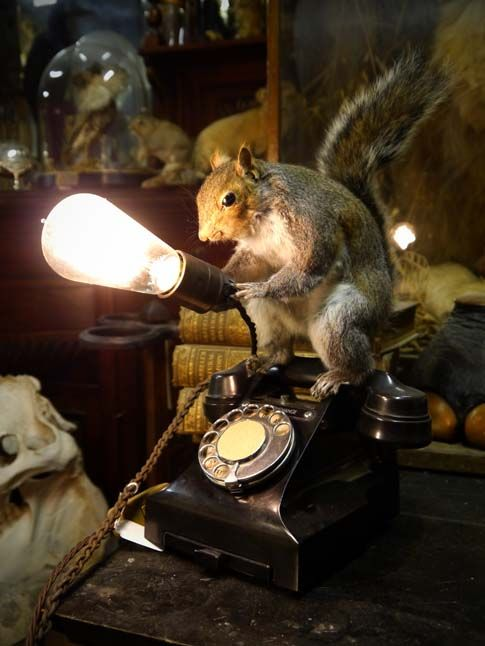 The Gallery - The Taxidermy Emporium