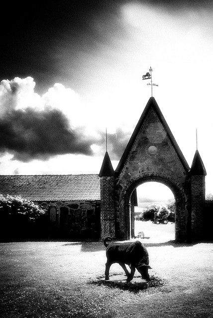 A bull at a gate, by Movitz on flickr