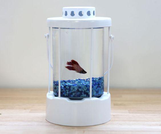 Lantern Fishbowl style
