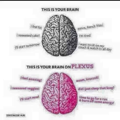 Which brain do you want?!?!