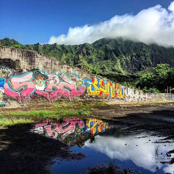 Graffiti and nature #hawaii #Oahu #photo #iphone6 #photosafari #alexvakulin #photography #nyip #pictures #digitalimages  #city #prophoto #pophoto #shuterbug #canonphoto #canon #camerapro #images #photochase #neverstopphoto #jpg #vsco #vscocam #perfectphoto #photooftheday #all_shots #procamapp #photoeverything