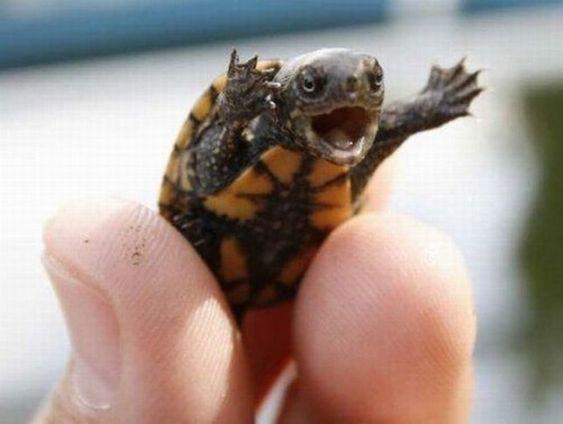 Happy baby turtle is happy
