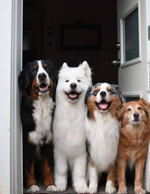 Dogs   Happy House, Pets your LifeStyle
