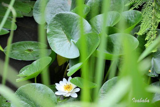 8ème jour : Belle plante.....