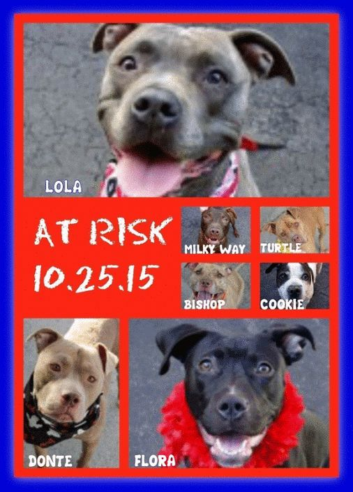 AT RISK 10.25.15. 7 DOGS IN IMMINENT DANGER. LOLA, COOKIE, TURTLE, MILKY WAY,…