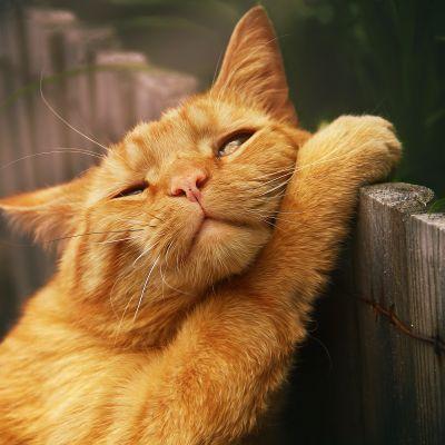 Sieh dir hier die schönsten Tierfotos an! Mein Bild ist auch dabei.