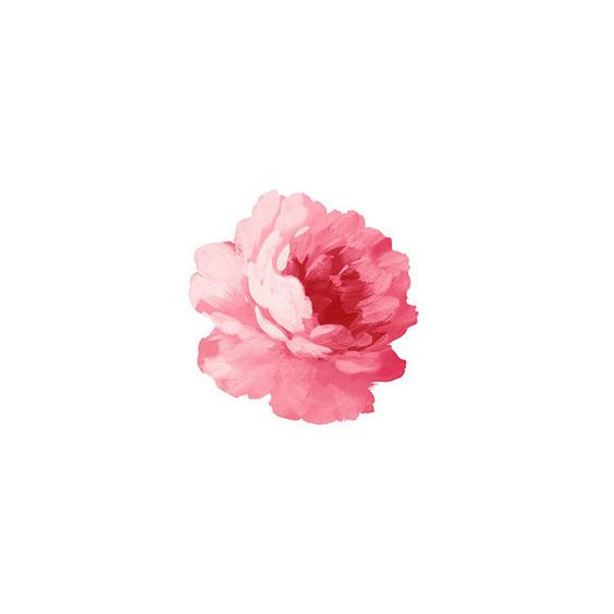 e·bul·lience ❤ liked on Polyvore featuring floral, flowers, pink and filler