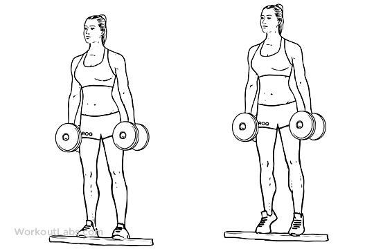 Standing Dumbbell Calf Raise Illustrated Exercise Guide Legs