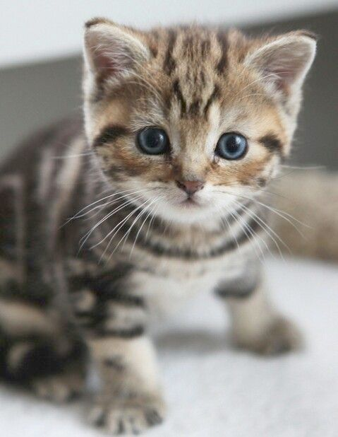 I M Just Saying You Ve Got Bad Luck When It Comes To Thinking With Images Ginger Kitten Cats Kitten Names