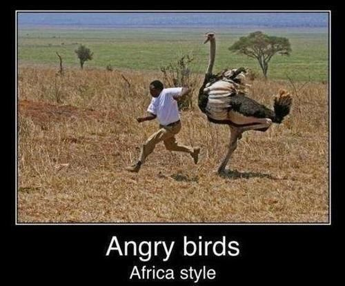 Angry Birds: Africa Style