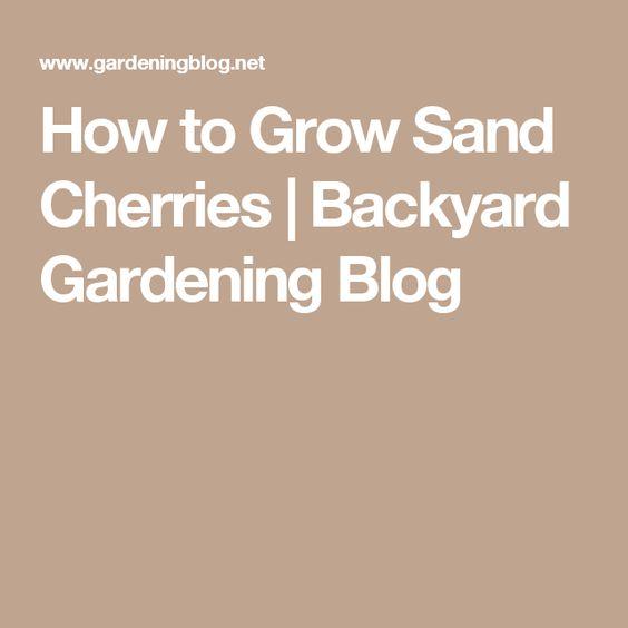 How to Grow Sand Cherries | Backyard Gardening Blog