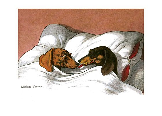 DACKELN DOGS DACHSHUNDS DACHSHUND ON SCOOTER TECKELS FRIDGE MAGNET