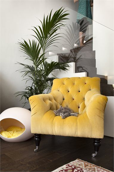 Amazing tufted mustard chair. Loving all things tufted and yellow!!