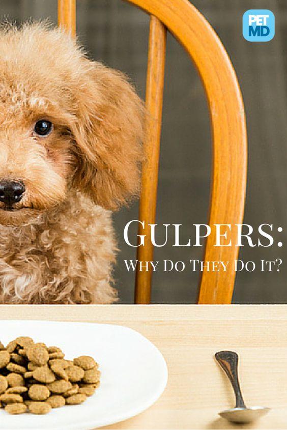 Is your dog a gulper?