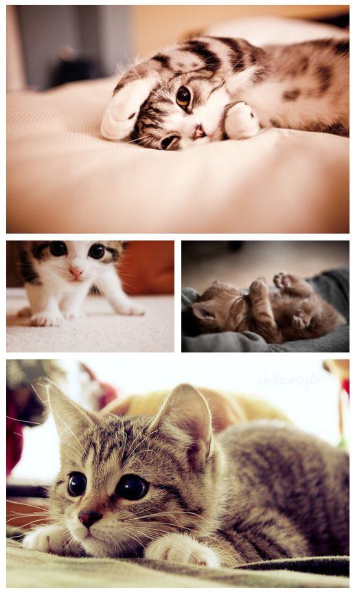 Kitties to make you happy :)