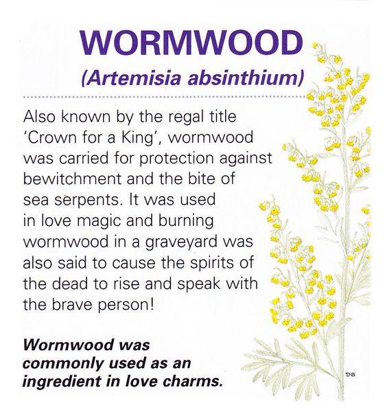 Magical herb wormwood: