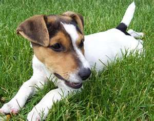 I love jack russel terriers. End of quote.