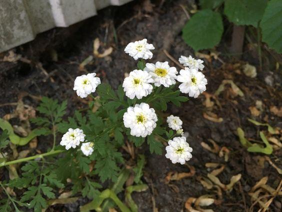 Небольшой цветущий куст