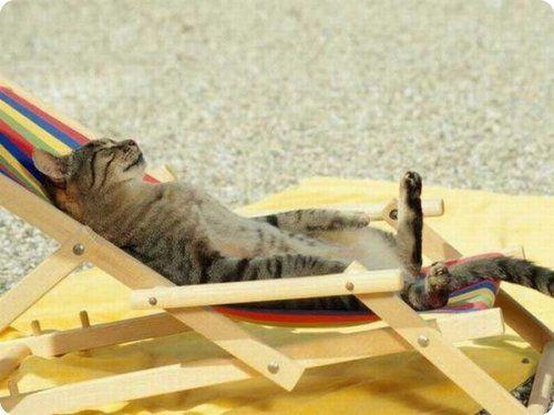 Top 30 des chats à la cool qui se relaxent dans des positions étranges | Topito