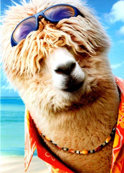 """Alpaca Greeting Card - Surfer, 5x7, Message Inside  Fun and colorful alpaca birthday greeting card.  Message inside: """"It's like... just a number, man!   HAPPY BIRTHDAY"""""""