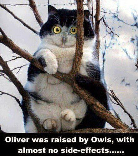 Funny cat raised by owls - http://jokideo.com/