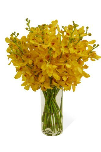 Gold-touched Mokara Orchid Bouquet (2...: