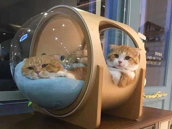 Cosmic Cat Beds Inspired By Classic Spaceships Cat Bed Pet Beds