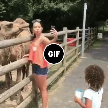 Nossa este camelo é guloso quase engole a turista