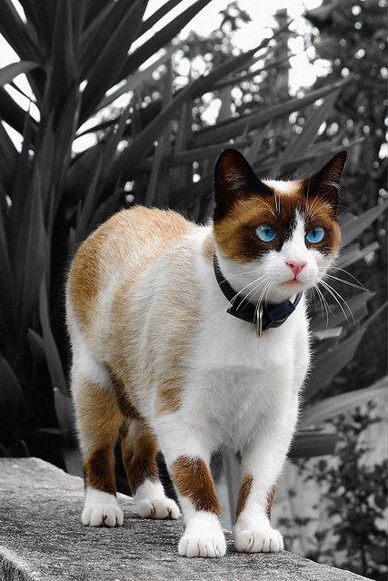 beautiful cat. unique markings