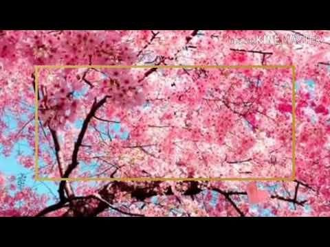 Gacha Life Background Intro Youtube Aesthetic Backgrounds Cute Backgrounds For Phones Anime Backgrounds Wallpapers