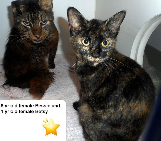 Adopt Bessie And Betsy On Cute Animals Animal Shelter Animal Rescue