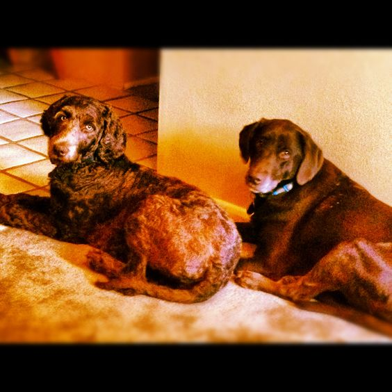Friends Bella and Mabel