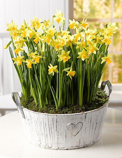 Tete a Tete Bowl Flowers
