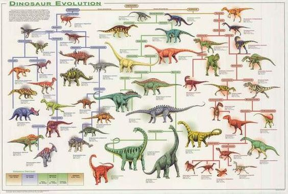 An amazing infographic poster with detailed facts about Dinosaur Evolution! Perfect for school classrooms and fossil hunters! Fully licensed. Ships fast. 24x36