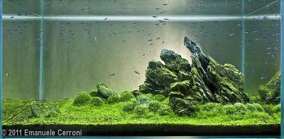 2011 AGA Aquascaping Contest - Entry #250