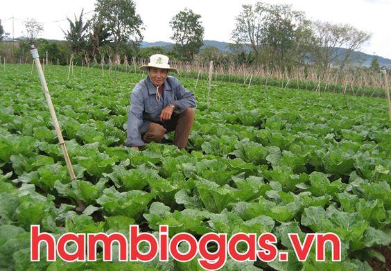 Biogas trong sản xuất nông nghiệp