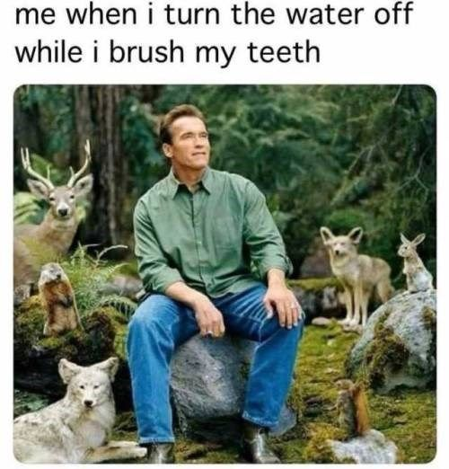 18 Fresh Animal Memes That Are Nothing But Funny Funny Relatable Memes Animal Memes Clean Memes