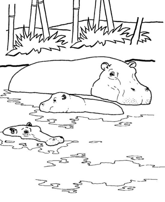Hippo Coloring Page Animal Coloring Pages Coloring Pages For Kids Coloring Books