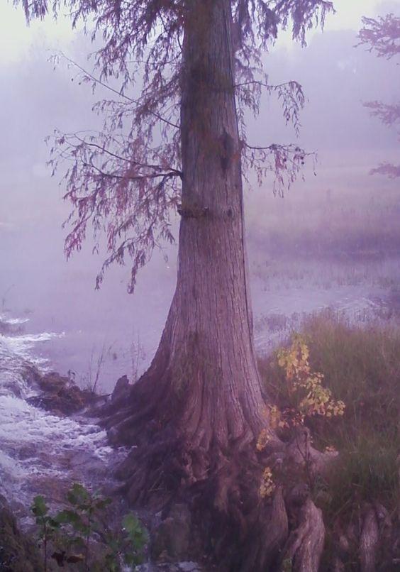 Foggy morning in Wimberley, TX  Photo by Doyle E Odom II